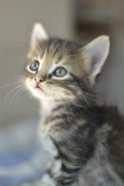 AWWWWWWWWWWWWWWWWWW: Cute Animal, Kitty Cat, Kitty Kitty, Cats Kittens, Kittycat, Adorable Animal