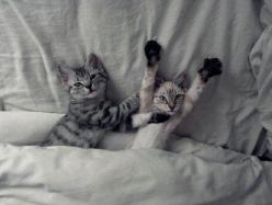 //cute kittens: Hand, Kitty Cats, Cute Cats, Funny Cat, Tickle Tickle, Kitty Kitty, Morning Stretches, Baby Cats