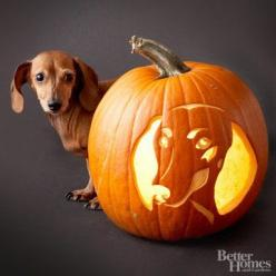 Cuteness alert! Carve this miniature dachshund on your pumpkin or choose your favorite canine from our free gallery.: Carving Stencil, Pumpkin Stencil, Halloween Pumpkin, Wiener Dogs, Dachshund Pumpkin