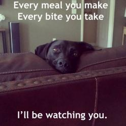Every meal you make.... (I love how every meme that uses these lyrics also uses a black lab--as a black lab mommy, I can attest to the truth of this statement): Doggie, Pet, My Life, So True, Funny Stuff, Funny Animal