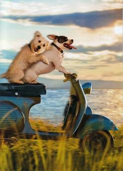 Get your motor running ...... Head out on the highway ....... Lookin' for adventure ........... And whatever comes our way ... Born to be wild  ........: Doggie, Funny Dogs, Romantic Card, Pet, Road Trips, Dog S, Friend, Animal