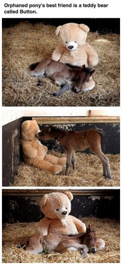 I'm dying! This is adorable!!!: Baby Horses, Best Friends, Adorable Animals, Teddybear, Teddy Bears, My Heart, Orphaned Pony S, So Sad, Foal