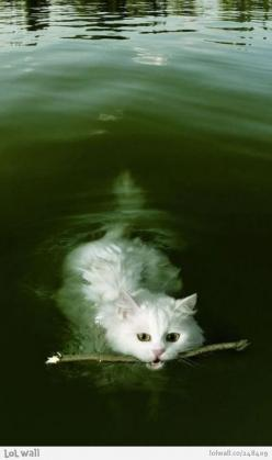 I don't have the heart to tell him he's not a dog...: Kitty Cat, Funny Cat, Swimming Cat, Kitty Kitty, Crazy Cat, Cat Lady, White Cat, Kittycat
