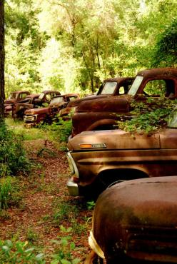 Not a chevy, but pretyy cool.  Amazing shots of Vintage Ford Trucks - so unique!: Abandoned Cars, Rusty Trucks, Trucks Cars, Vintage Ford, Abandoned Ford, Cars Trucks