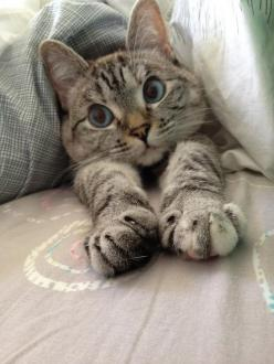 Pinterest: Nuggwifee☽ ☼☾: Kitty Cats, Cute Cats, Kitty Kitty, Kitty S, Morning Stretches, Good Morning, Cat S, Silly Cat