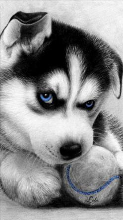 Pinterest @Sagine_1992 Sagine☀️: Amazing Drawing, Cute Animal, Pencil Drawing, Husky S, Animal Sketch, Huskies Puppies