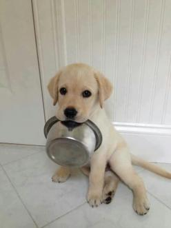 Puppy: Doggie, Cute Puppies, So Cute, Dinner Time, Food Network/Trisha, Cute Animals, I M Hungry, Adorable Animal