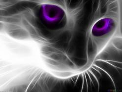 purple eyes.. photo-shopped.. but who cares .. it looks snazzy :D: Cool Cats, Cat Art, Big Blue, Cat Eyes, Blue Eyes, Fractal Animal, Kentucky Wildcats