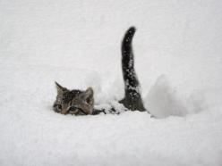 Snow Cat - Click for More...: Kitty Cat, So Cute, Snowkitty, Snow Cat, Snow Kitty, Kitty Kitty, Snowcat, Cat Lady