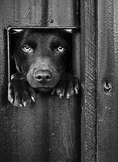 Those moments when your dog is so excited to greet you when you're coming inside the door that they jump up just to see you a few seconds sooner :) #bionicmoments www.bionicplay.com: Beautiful Hey, Doggie Door, Black Dogs, Black White, Doggie Window,