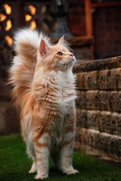 Top 5 Best Cat Breeds: Beautiful Cat, Kitty Cat, Orange Cat, Maine Coon, Pretty Cat, Kitty Kitty, Fluffy Cat, Kittycat