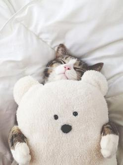 Who can resist tiny animals? They can always make me smile.: Kitty Cats, Cute Cats, Teddy Bears, Tumblr Cat, Cat Hug, Kitty Kitty, Kittycat, Cat Lady