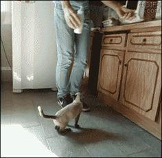 Kitten-drinks-from-bottle gif. more here http://artonsun.blogspot.com/2015/04/kitten-drinks-from-bottle-gif-more-here.html