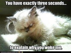 This is me if you wake me up!