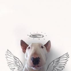 Because your dog is your little angel. Sometimes literally.: Dog Owners, English Bull Terriers, Rafael Mantesso, Pitbull, Jimmy Choo, Pit Bull, Bullterriers