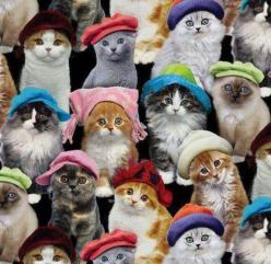 Cats: Kitty Cat, Funny Cat, Cute Cat, Crazy Cat, Funny Animal, Cats In Hats