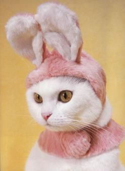 #Cats with #hats ! @Meredith Dlatt Ryan - I'm thinking about this one for Paisley. :)  Repinned from Sarah Barnes: Kitty Cats, Bunny Kitty, Cat S, Easter Bunny