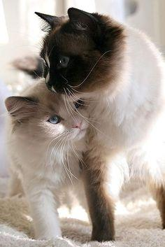 "♥✮✮""Feel free to share on Pinterest"" ♥ღ www.CATSANDME.COM"