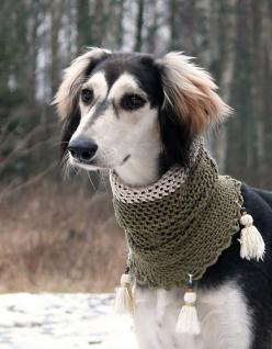 Google Image Result for http://www.deviantart.com/download/51610222/Marlo__n_The_Saluki_by_eljakim.jpg: Hound Dogs, Doggie Cowl, Beautiful Saluki, Saluki Dogs, Dog Breeds, Beautiful Dogs, Doggie Style, Saluki Breed