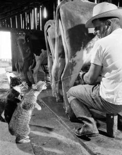 Have you done this before?: Fresh Milk, My Dad, Funny Stuff, Cute Animals, Farm Cat, The Farm