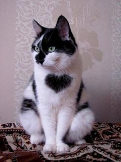 Heart marking!: