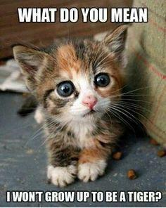 http://www.insightjewels.com And neither will you be able to kill that toy mouse-on-a-string. Ever.: Kitty Cats, Animals, So Cute, Cute Kitten, Pet, Kittens, Eye