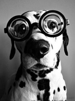 its my doggie!!!!!!!!!!!!!!!!!!!!!!!!!!!!!!!!!!!!!!!!!!!!!!!!!!!!!!!!!!!!!!!!!!!!!!!!!!!!!!!!!!!!!!!!!!!!!: Doggie, Googly Eyes, Black And White, Pet, Black White, Photo, Man
