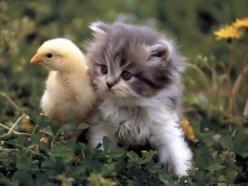 Kitten: Best Friends, Adorable Animals, Cute Animals, Kitty Kitty, Baby Animals, Baby Chicks, New Friends, Cute Kittens