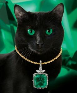 meow!: Color Green, Beautiful Cats, Black Cats, Kitty Kitty, Green Eyes, Cat S