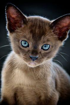 """Opal-eyed Kitten"" by Renee Hubbard"