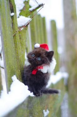 Teeny tiny Santa kitty -- [REPINNED by All Creatures Gift Shop] I'm cold. Why am I out here? So you can get a picture?: Christmas Cats, Kitty Cat, Santa Kitty, Kitty Kitty, Christmas Kitty, Black Cat, Merry Christmas