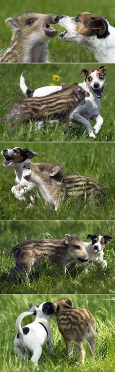 Unlikely friends. Love how they are laughing so exuberantly.