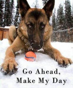Wanna Play? German Shepherd ... beautiful ! Will have a fur baby shepherd in April :): German Shepherd Dogs, Animal Pics, Funny Animals, German Shepards, Animals Dogs, Funny Stuff, German Shepherds Gsds, Dog Stuff, Furry Friends