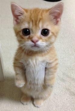 Well, this is ADORABLE!: Funny Animals, Kitty Cats, Real Life, Adorable Animals, Cute Cat, Cute Animals, Life Puss, Kittycat