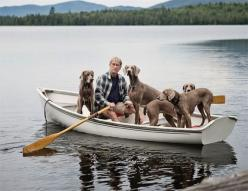 William Wegman out for a row with his dogs / photo by Kimberly M. Wang: Dogs Dogs, Pets Weimaraners, Dog Photos, Dogs Pets, Dogs Surprised, Weimaraner Dogs, Dogs Photo