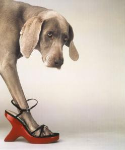 William Wegman, Walk-a-thon....gotta love it..those shoes!!: