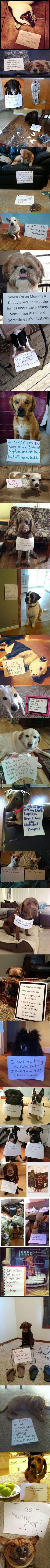 "Dog shaming is hilarious"": Shaming Compilation, Dog Shame, Dog Shaming, Funny Dogs, Funny Stuff, Puppy, So Funny"