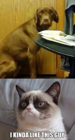 Grumpy Cat. I laughed way too hard at this lol: Cats, Dogs, Grumpycat, Funny, Grumpy Cat Meme, Friend, Animal, Cat Memes