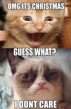 Grumpy Cat Quotes | Funny Cats | Top 49 Most Funniest Grumpy Cat Quotes: Funny Animals, Grumpy Cat Quote, Grumpycat, Christmas, Funny Stuff, Humor, Funny Grumpy Cats, Grumpy Cat Meme, Cat Memes