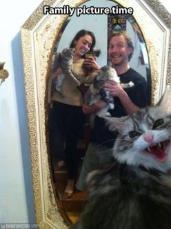 HAHAHAHA!!! This is why I love cats.: Cats, Family Pictures, Picture Time, Photobomb, Cat Face, Funny, Family Photo, Animal
