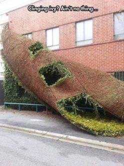 I Didn't Even Know This Could Happen: Stuff, Brick, Funny, Plants, Ivy, Things, Building Shedding