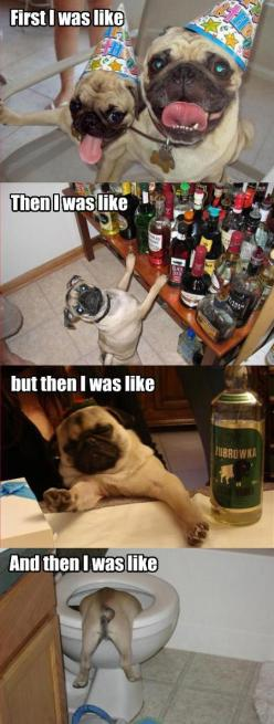 I had a rough night…: Animals, Party'S, Party Animal, Party Pug, Funny Stuff, Funnies, Pugs, Dog