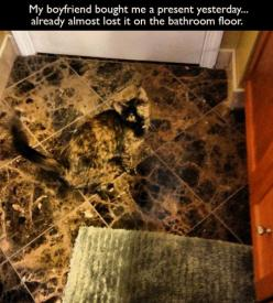 it seriously took me three minutes to figure out what it was!! Look closely!!: Cats, Camo Cat, Animals, Floor, Pet, Funny Stuff, Funnies, Kitty, Camouflage