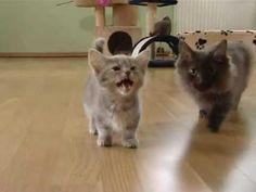 Little kitten has adorable meow - Page 2 of 2 - The Cutest Kitties