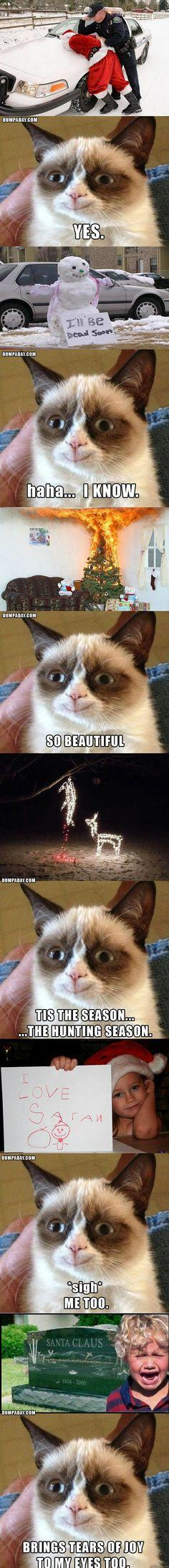 LOL!!!! :D: Cats, Giggle, Grumpycat, Funnies, Things, Grumpy Cat Christmas, Smile