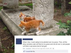 Someone needs to promise to do this for me when I die.: Cats, Idea, Funny, Crazy Cat, Cat Lady, Animal