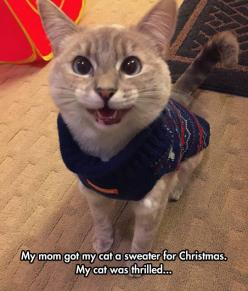 This Cat Has Christmas Spirit: Cats, Animals, Kitten, Kitty Sweater, Funny, Crazy Cat, Christmas Sweaters, Cat Sweaters, Cat Lady