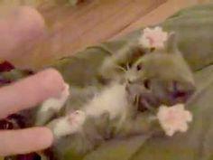 Who Wants to Watch the Cutest Kittens on YouTube? http://www.petcentric.com/01-21-2014/best-of-youtube-cute-kitten-clips