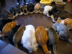 21 cats having lunch   ...........click here to find out more     http://googydog.com: Cats, Animals, Pet, Funny, Crazy Cat, Circle, Kitty, Cat Lady