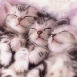 3 little kittens....awwww cute lil noses ;): Cats, Animals, Meow, Pet, Kitty Kitty, Kittens, Baby, Sweet Dreams, Adorable Animal